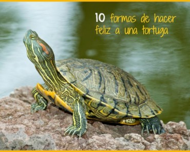 10 Formas de hacer feliz a mi tortuga