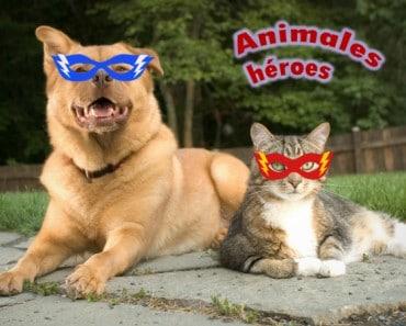 Animales que son héroes