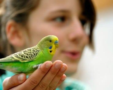 Los mejores pájaros para tener de mascota