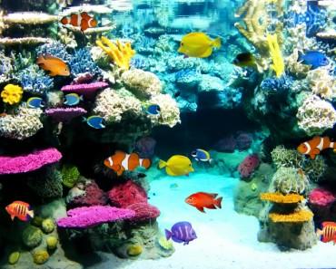 15 mejores peces para acuarios