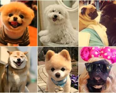 Los 6 perros más famosos de internet