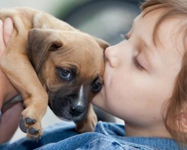 La importancia de adoptar mascotas