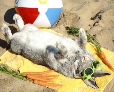 Cómo refrescar a un conejo en verano
