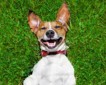 Vídeos divertidos de perros