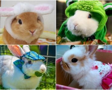 Los conejos con mejores disfraces