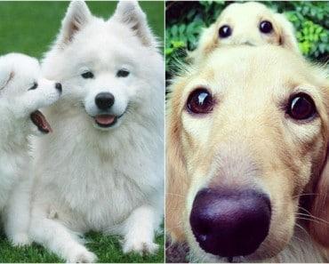 Perros papás y sus adorables hijos idénticos