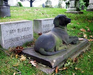 Cementerios de Mascotas: Lugares donde honrar la memoria de nuestros animales