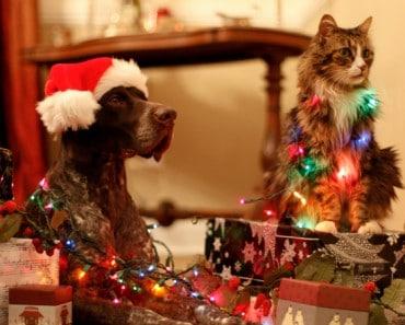 Gifs Animados de Bonitas y Traviesas Mascotas Navideñas