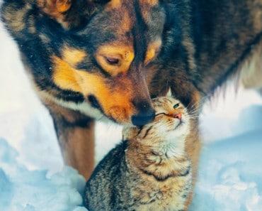 Antes de regalar una mascota ten en cuenta esto