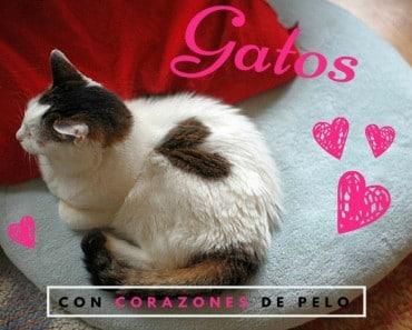 22 gatos con manchas de nacimiento en forma de corazón