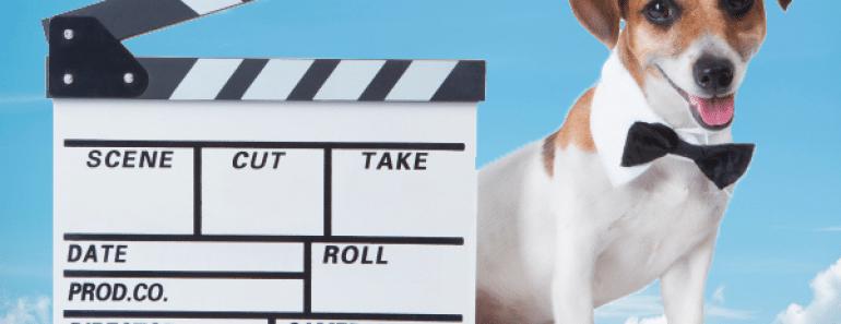 Las mejores películas protagonizadas por animales