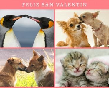 Especial San Valentín Animal: derrítete de amor con estas mascotas amorosas