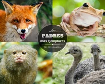 Los padres más ejemplares del reino animal