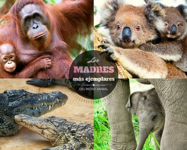 Las mejores madres del reino animal