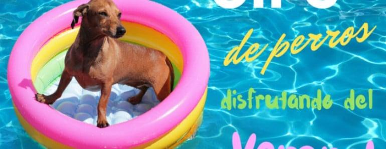 Gifs graciosos de perros bañándose y disfrutando del verano