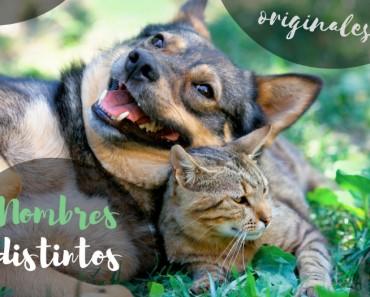 Nombres raros, distintos y graciosos para mascotas