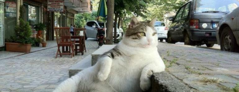 El gato más famoso de Estambul consigue su propia estatua