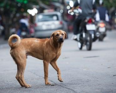 España multará hasta con 30.000 € las agresiones o el abandono de mascotas