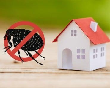 Cómo eliminar las pulgas en casa y evitar que vuelvan