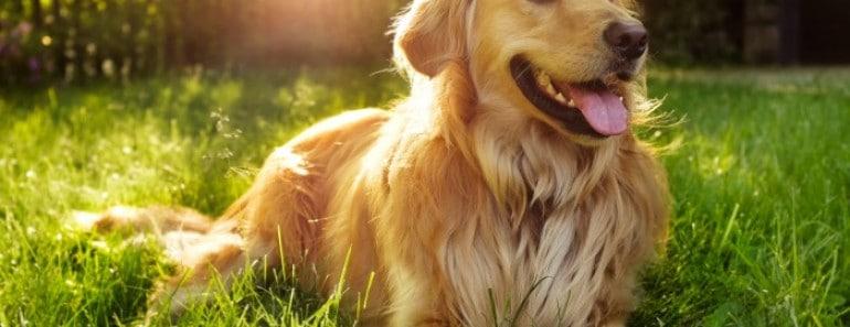 Grandes mitos sobre los perros: ¿Verdaderos o falsos?