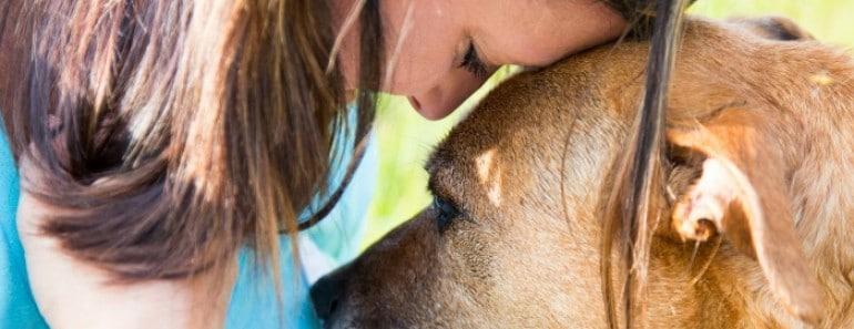 ¿Sienten los perros el dolor de las personas?