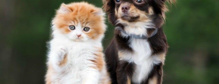 ¿Pueden nuestras mascotas transmitirnos enfermedades?