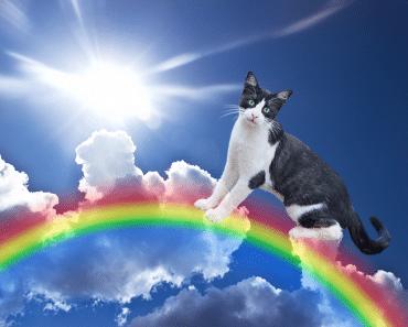 La leyenda del Puente del Arcoíris, donde van nuestras mascotas cuando fallecen