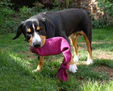 Puzzles y juguetes DIY para perros