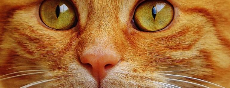 Frases de gatos: Si te gustan los gatitos no te pierdas estas frases