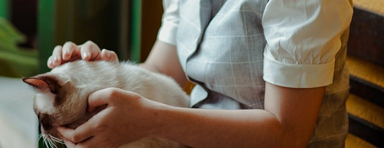 Lombrices en gatos: Cómo deshacerte de los parásitos intestinales