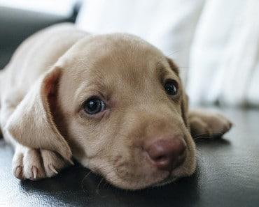 ¿Cada cuánto debo llevar a mi perro al veterinario?