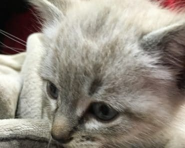 Vídeos de gatos que te harán sonreír