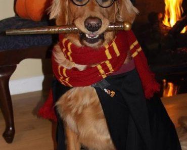 50 nombres para mascotas de Harry Potter