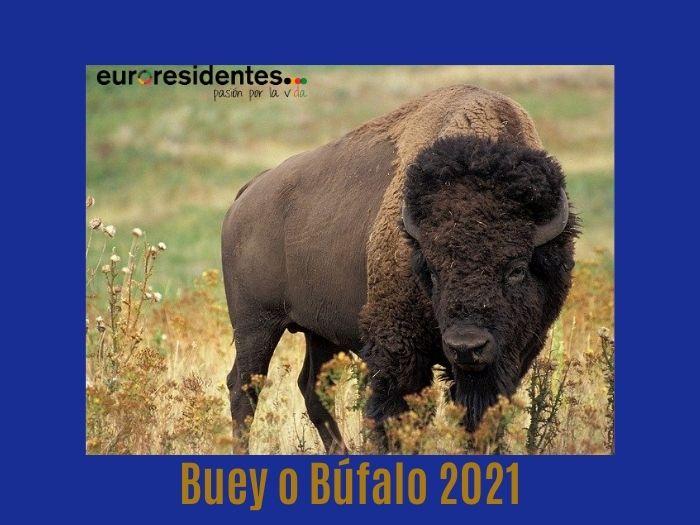 Buey o Búfalo 2021 Horóscopo Chino