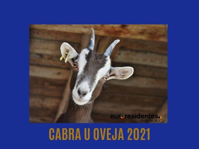 Cabra u Oveja 2021 Horóscopo Chino
