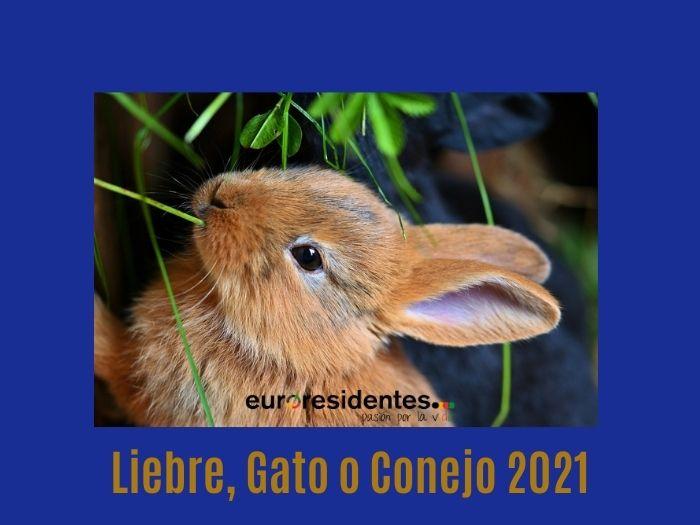 Liebre o Gato o Coneno 2021 Horóscopo Chino