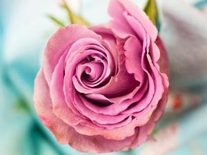 Significado del Rosa