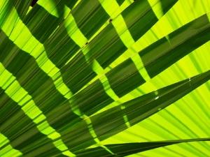 Significado del Verde