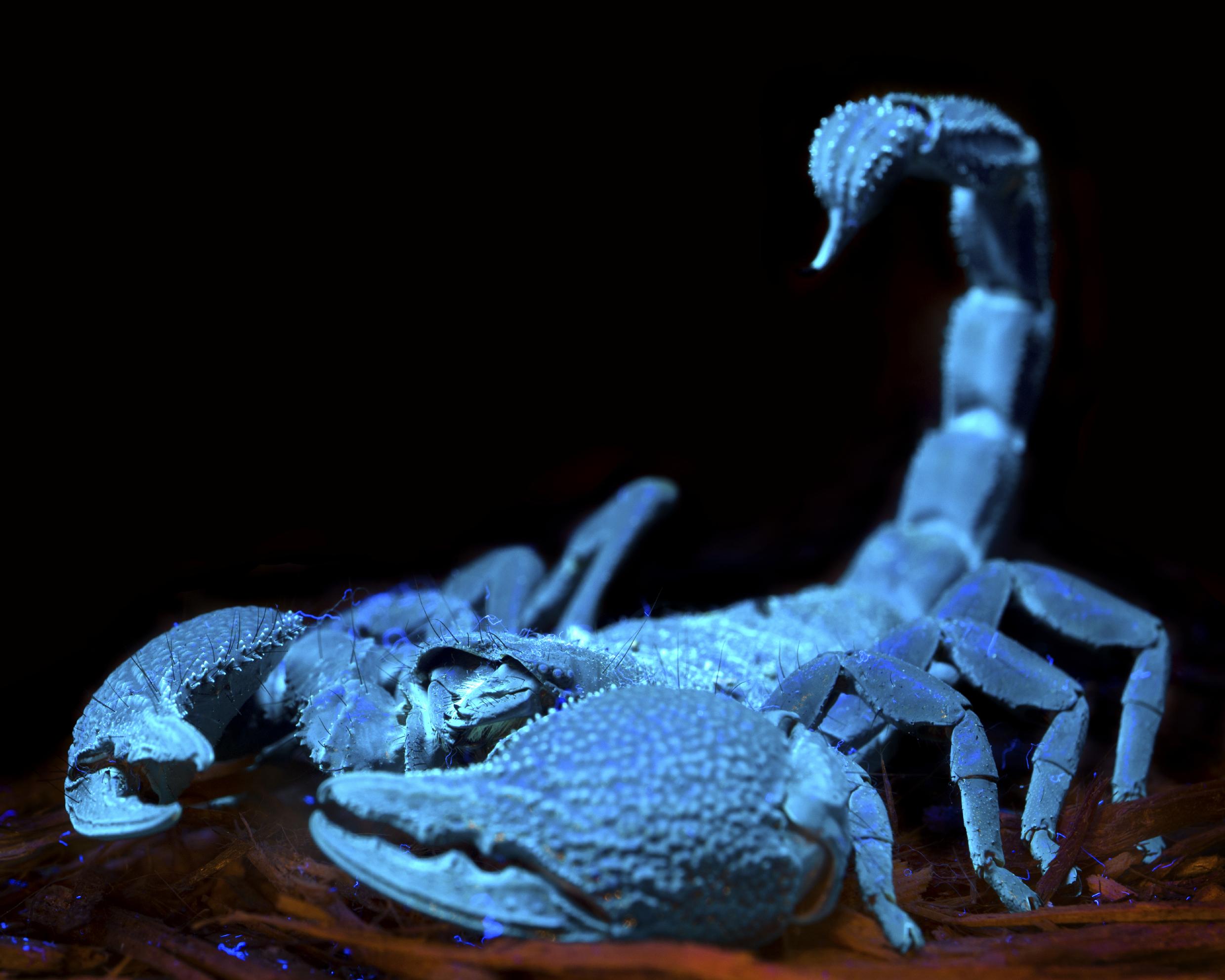 El escorpión es el símbolo  de Escorpio