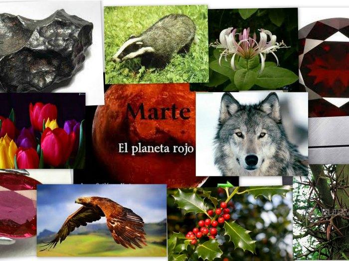 Características Aries