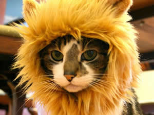 Ideas para disfrazar a tu gato en Carnaval