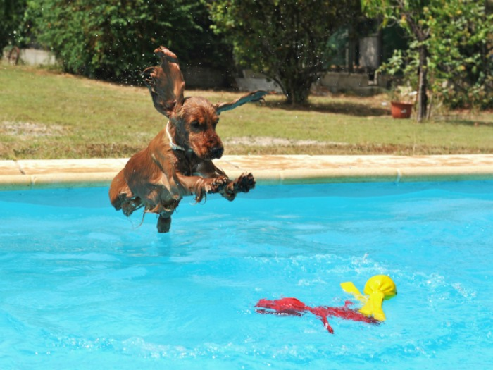 Cómo cuidar y refrescar a tu perro en verano