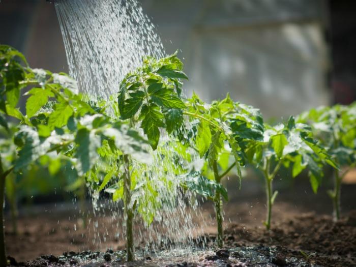 formas riego plantas
