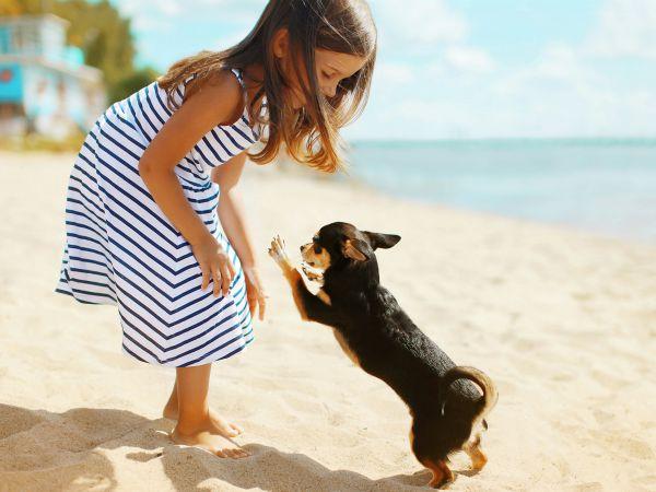 Pon una mascota en la vida de tu hijo, ganará en salud