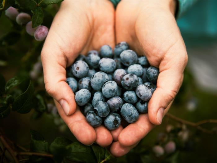 ¿Qué es la intolerancia hereditaria a la fructosa?
