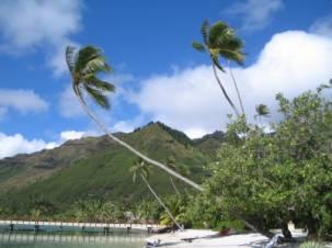 palmeras-cocos