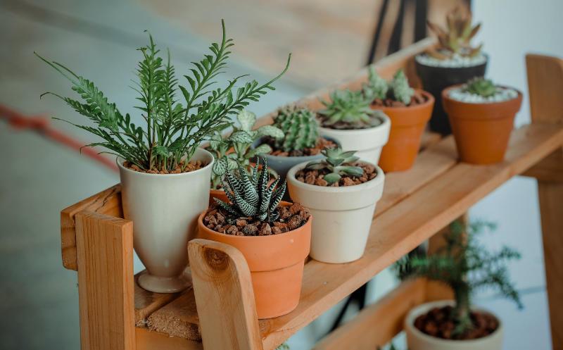 Clases de plantas y cuidados necesarios