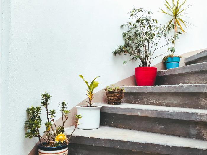 El problema del riego en las plantas domésticas