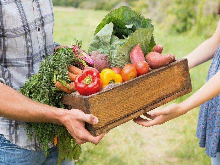 alimentos-organicos-contaminacion-euroresidentes
