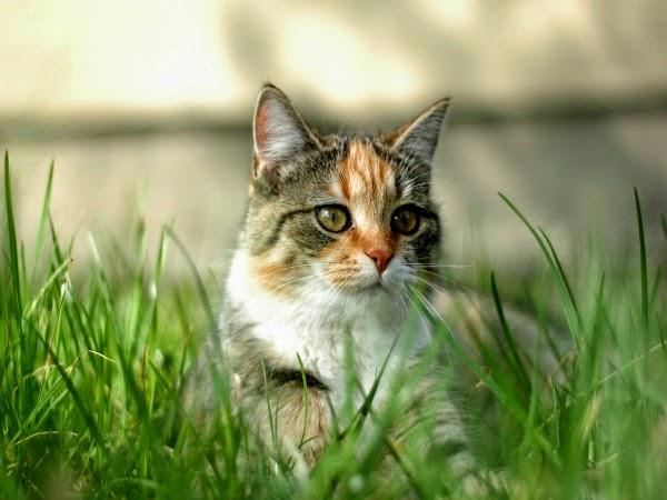 Parásito de los gatos como tratamiento para el cáncer